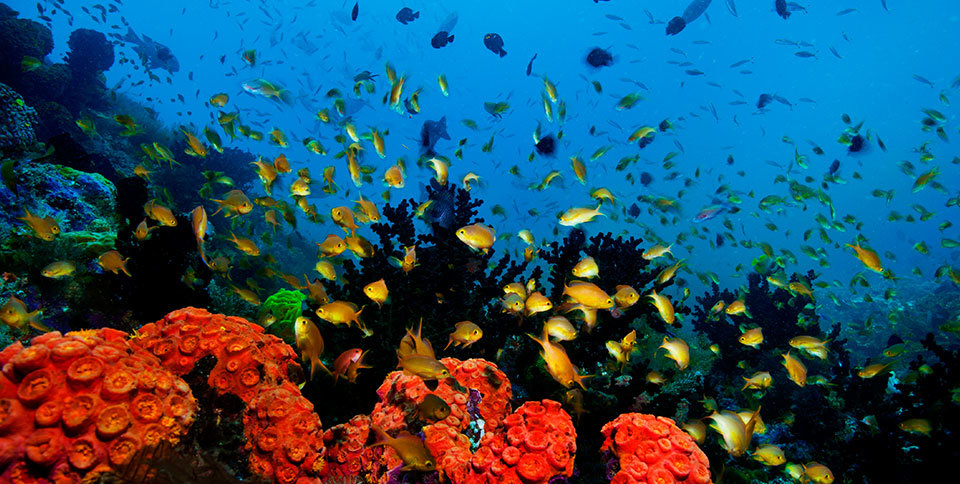 ökosystem Meer